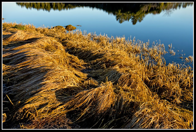 Nova Scotia; Inlet; Grass