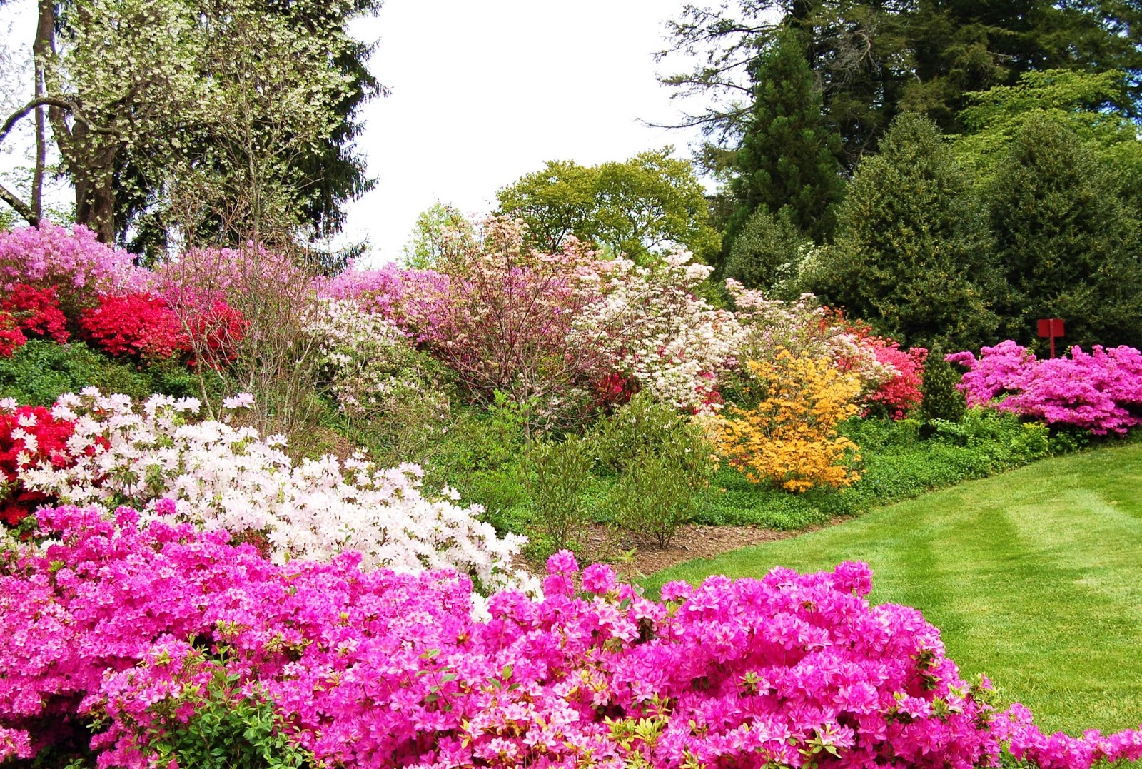 Mountain Musings Azalea Gardens