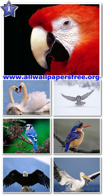 50 Beautiful Birds Wallpapers 1280 X 1024 [Set 1]
