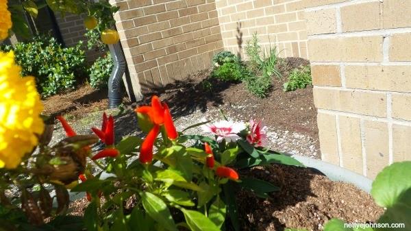 Lewis Vincent Elementary Garden