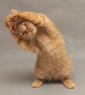 Foto Animali Divertenti Animate - Gif animate e divertenti di animali: la gallery Focus