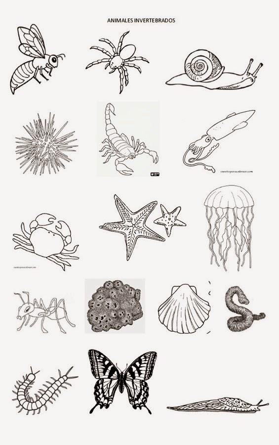 maestraescuela: Conocimiento del medio: Los animales invertebrados