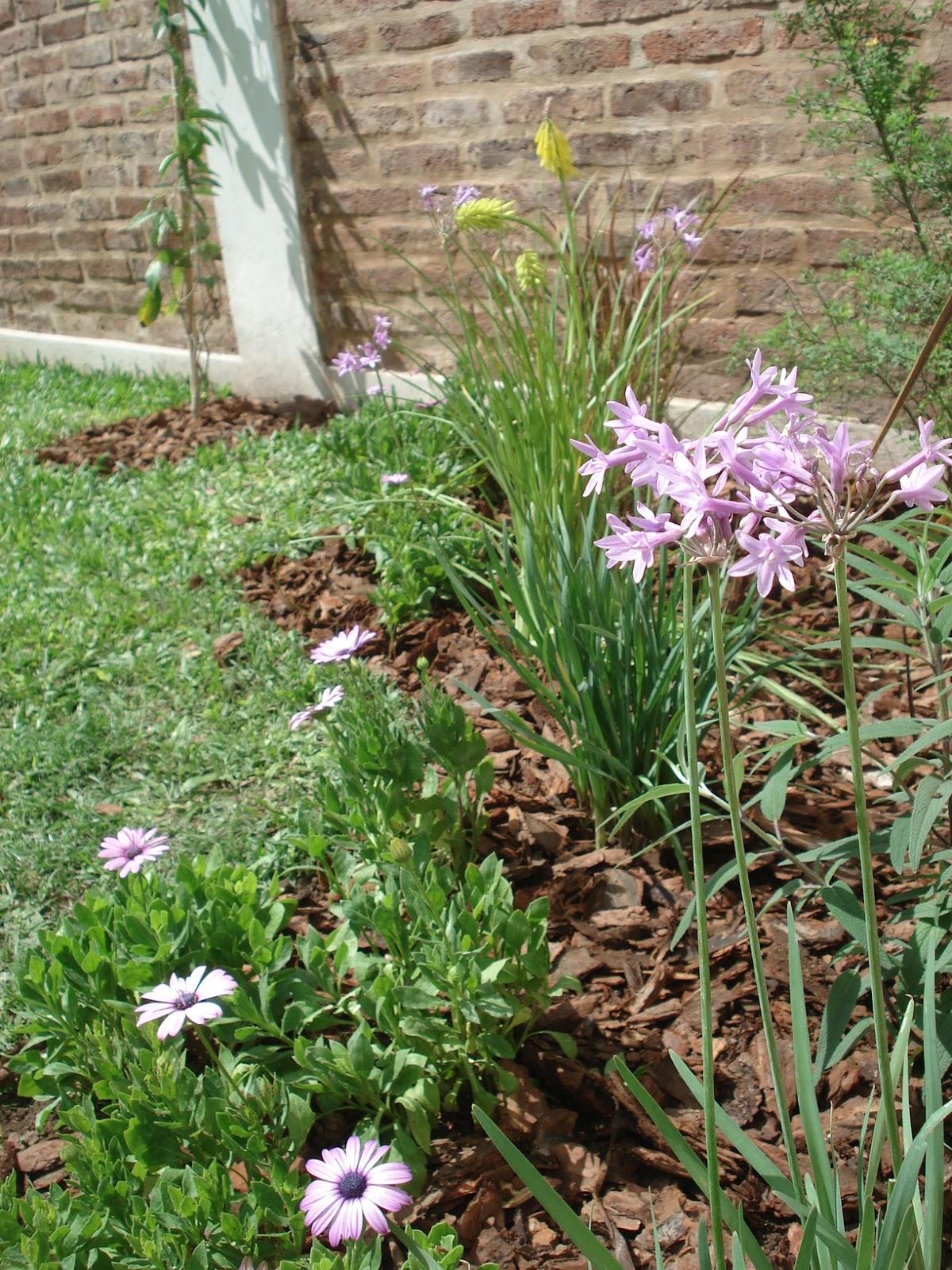 Reverdir jardineria y paisajismo jardin zig zag for Jardineria y paisajismo