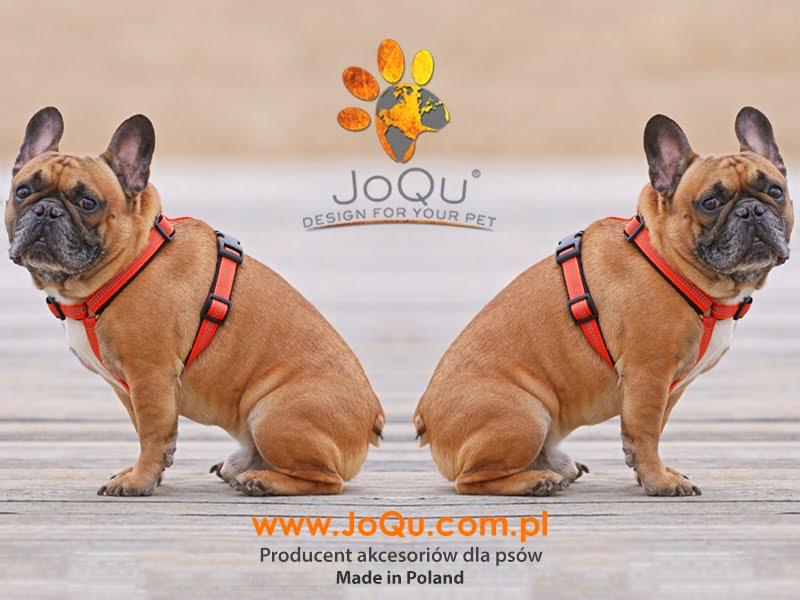 Akcesoria dla aktywnych psów