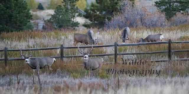 deer, hunting, hunt, outdoors