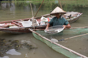 Catching baby shrimps in Tam Cốc