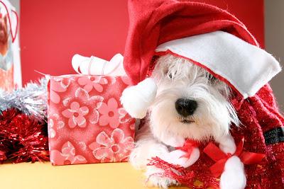 Postales navideñas para compartir con perrito de peluche y regalos
