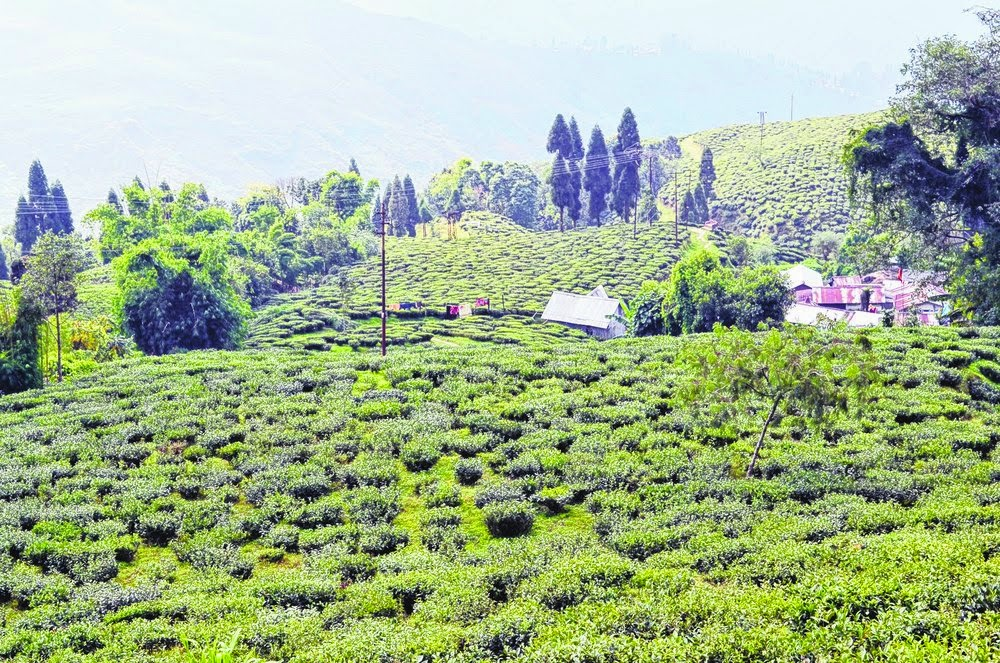 Joint Forum threatens agitation on tea wages