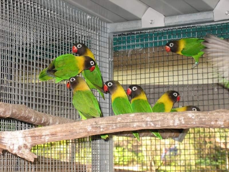 Photo brisbane lovebirds
