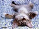 Membawa Kucing Ketika Tidur