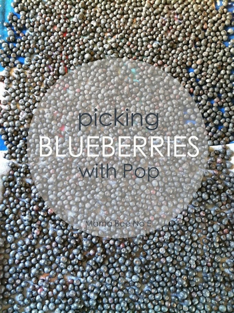 Summer Blueberry Picking