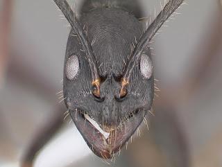 Semut, Alien, Mikroskop