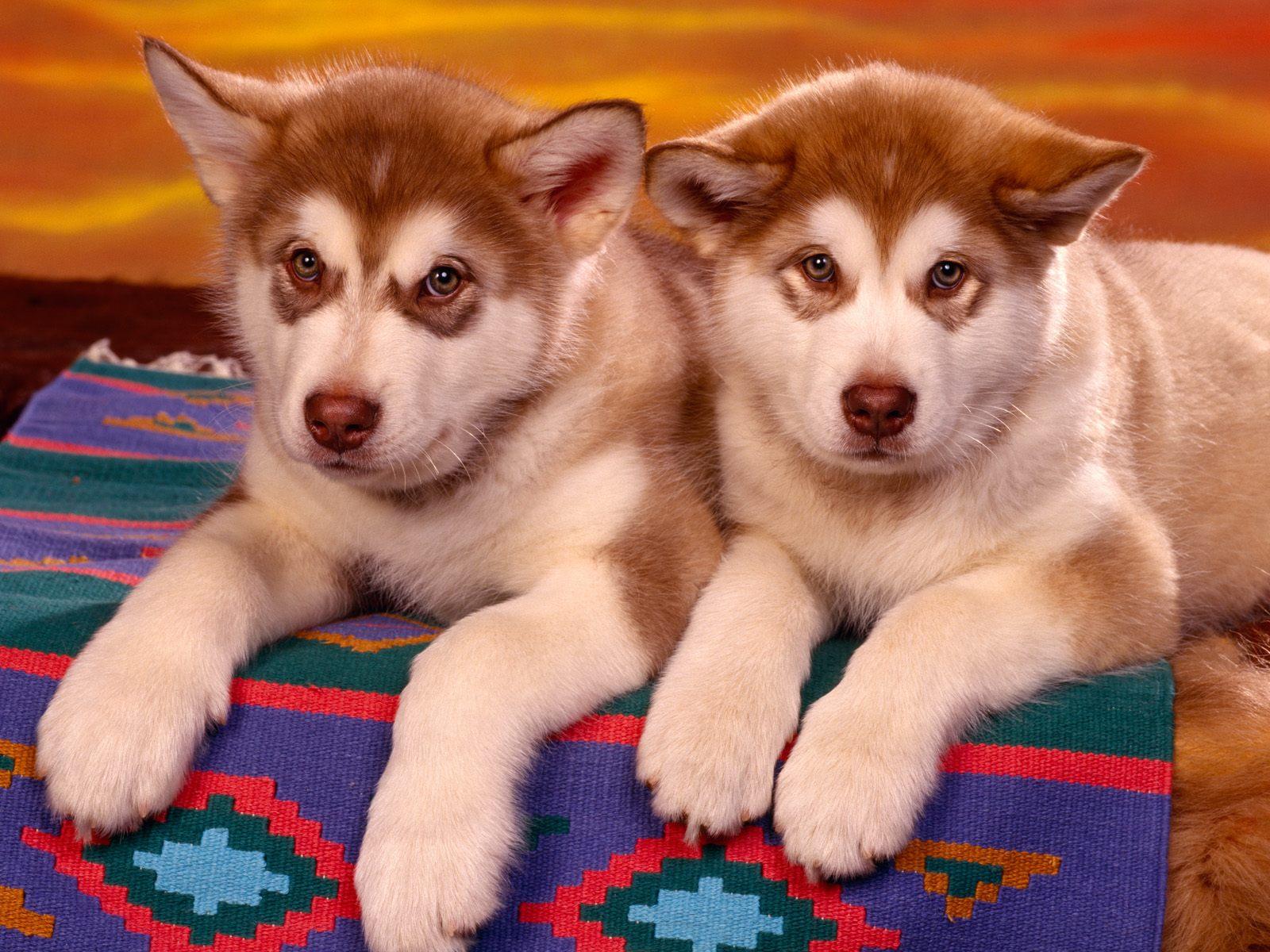 http://3.bp.blogspot.com/-QYjgGO2X7vc/TqxmQH7zOOI/AAAAAAAAAIc/dvna4KKTC98/s1600/Alaskan+Malamutes.jpg
