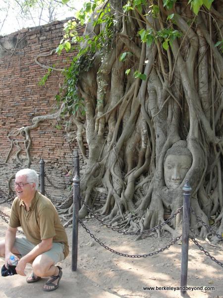 Strangled Buddha at Wat Phra Mahathat at Ayutthaya Historical Park in Thailand