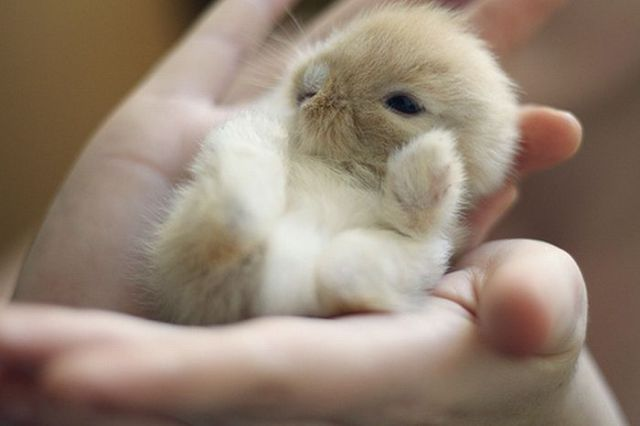 World's Smallest Animals | Photos | Funny And Cute Animals
