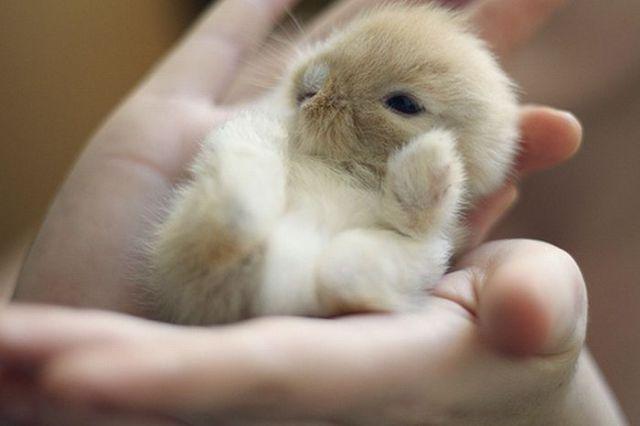 Worlds Smallest Animals Photos