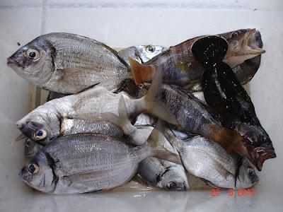 pescuit la Arsanas
