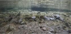 Cámara de peces