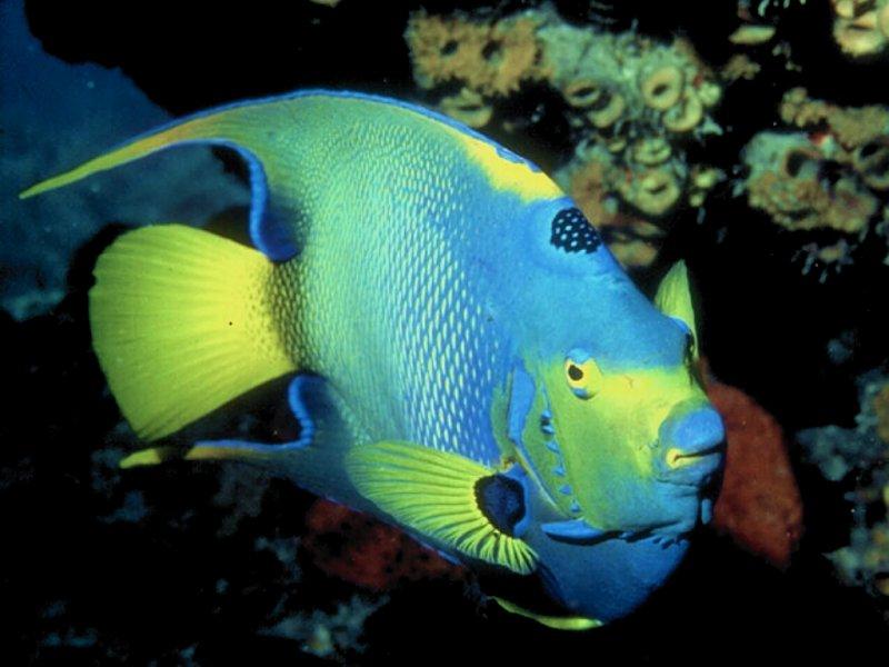 Colorful Fish Desktop Wallpaper - Nature Wallpaper