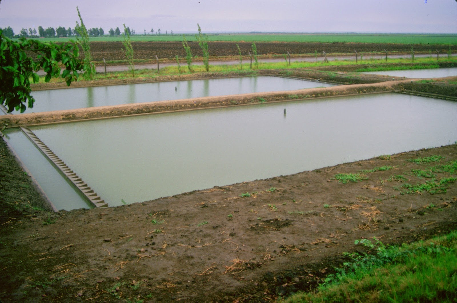 Feel mass group fish pond production for Tilapia fish farming