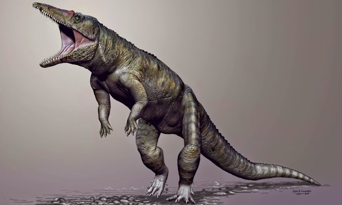 Mesozoic Miscellany 73