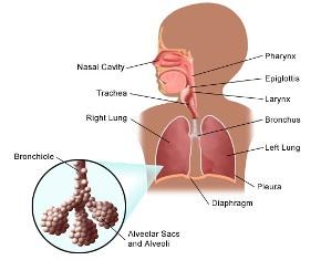 Obat Herbal Infeksi Paru Paru