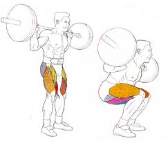 Grupos musculares sentadillas