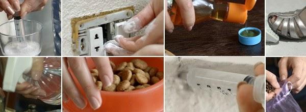 Dicas fáceis para acabar com as formigas em casa