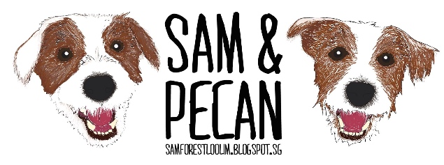 Sam and Pecan - Dog blog Singapore