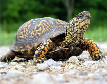 A Small Turtle : Little Turtle: A Little Turtle