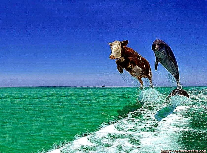 Animals Funny Pictures Take Photo Wallpaper | Best HD ...