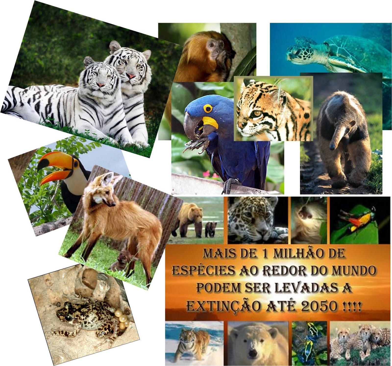 http://3.bp.blogspot.com/-Q_KM008flvo/TrWx5cWgRyI/AAAAAAAAABw/AKyLFYl1Kvo/s1600/animais+em+extincao.jpg