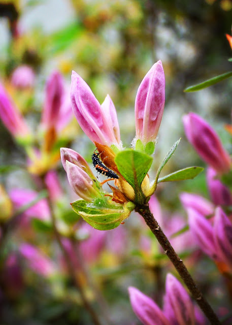 West Virginia photography flower flora insect