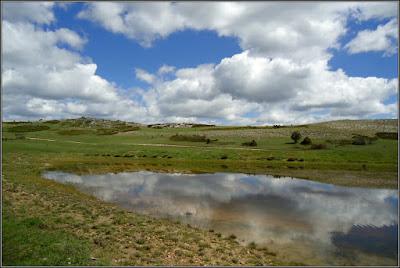 Lagunilla en Cañada Lengua (Quinto De Las Cumbres De Belvalle, Beteta)