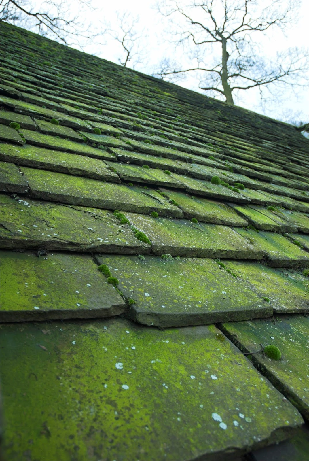 Phil S Main Roofing How To Get Rid Of Roof Moss
