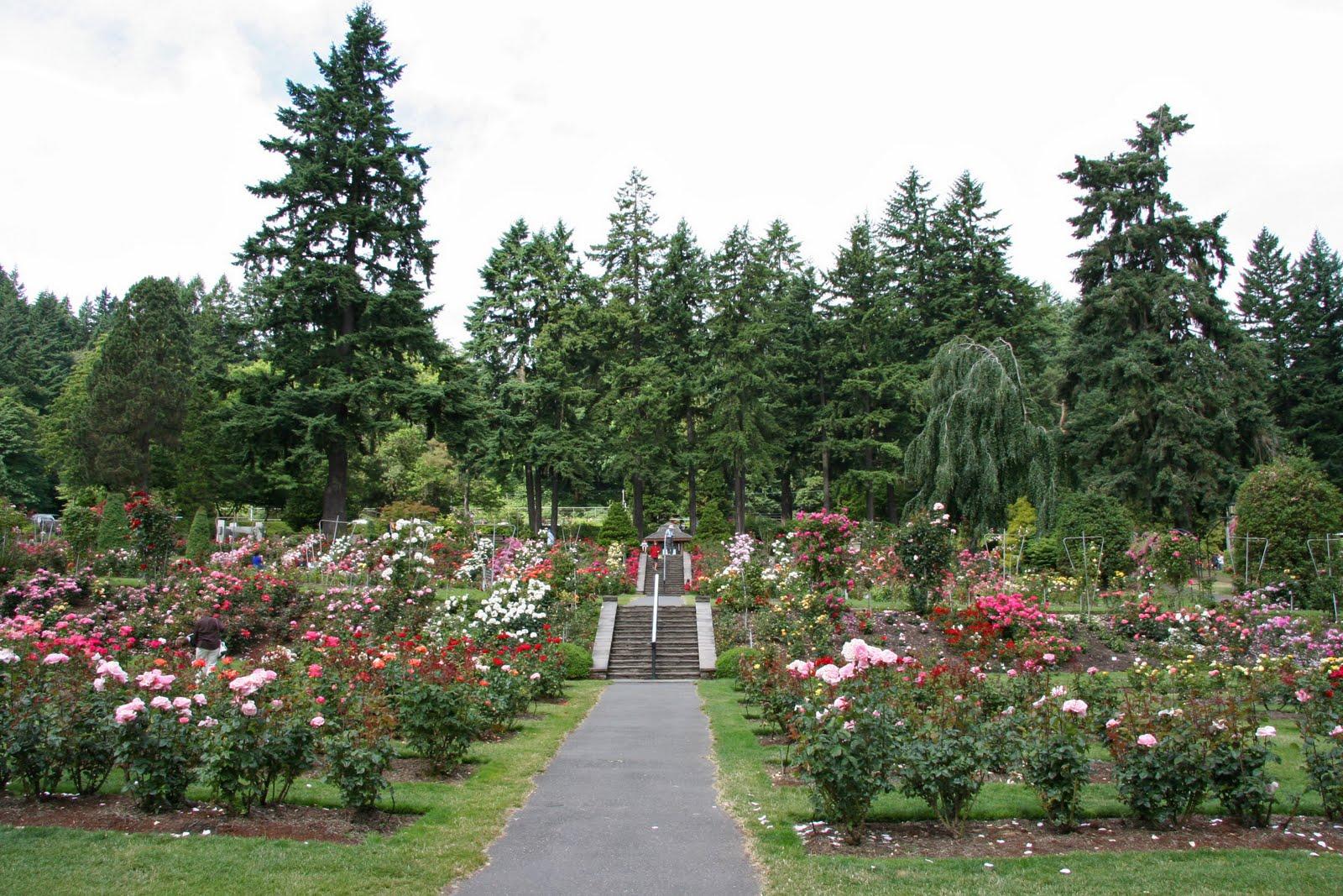 Daffodils Daydreams Garden Visit International Rose Test Garden In Portland Oregon