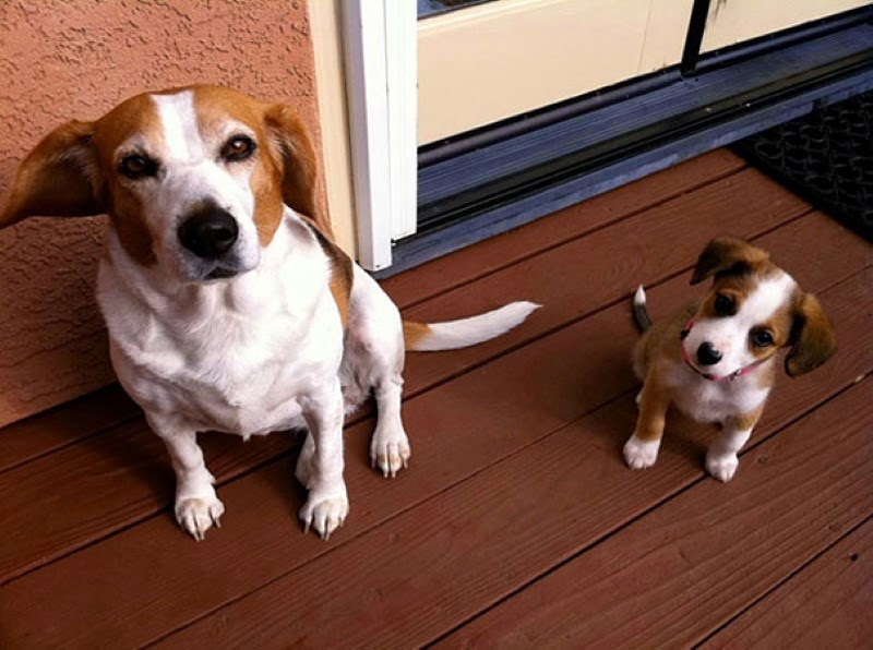 2. A puppy that looks just like its mom – only smaller. - 30 Animals With Their Adorable Mini-Me Counterparts