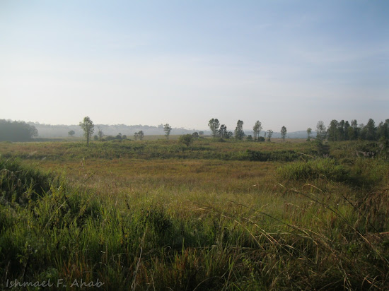 Grass in Phukhieo Wildlife Sanctuary