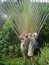botanische tuin Boca