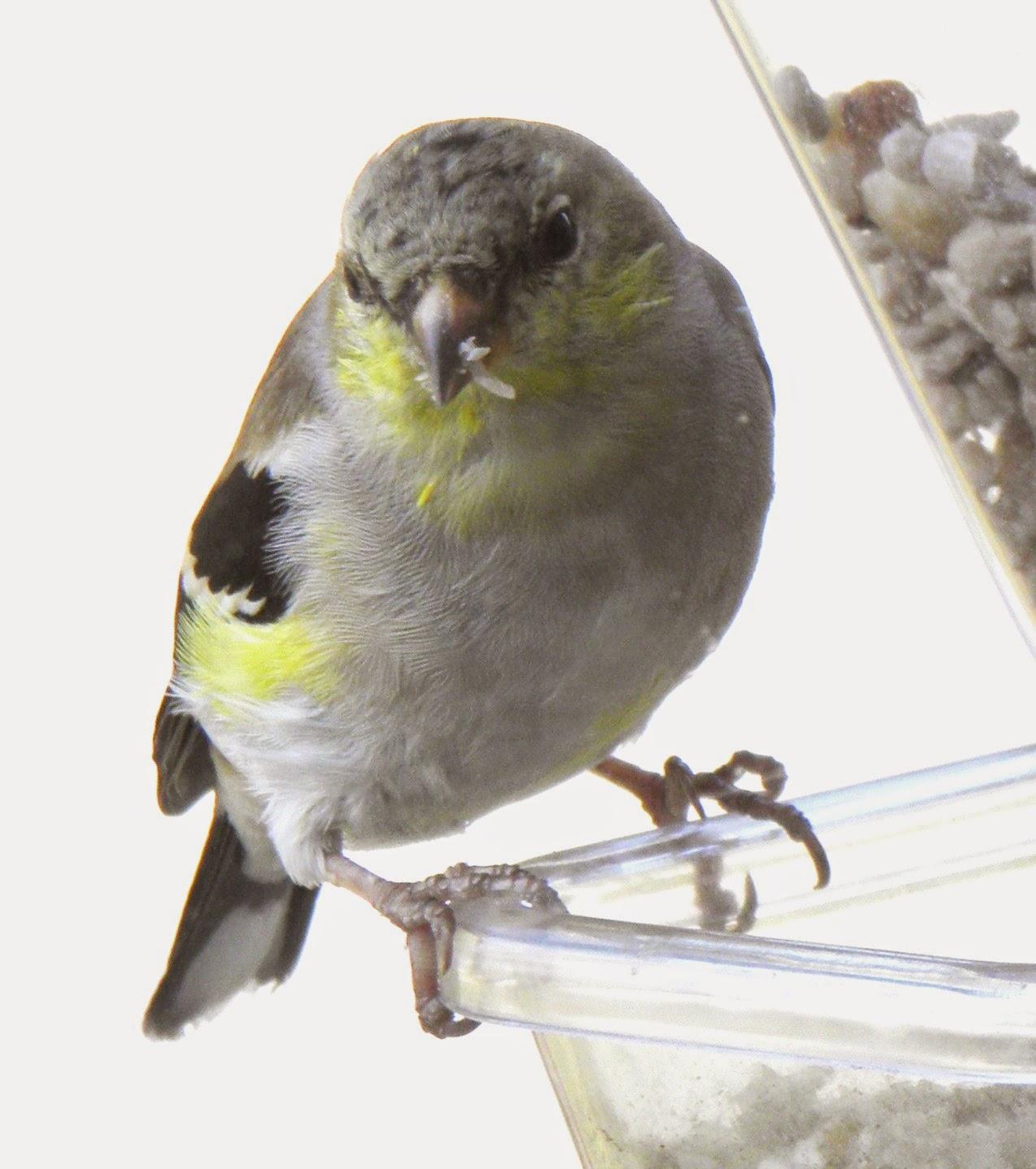 wild birds unlimited march 2015