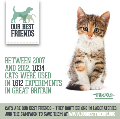Cats Don't Belong in Laboratories!
