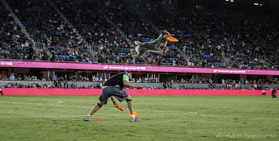 The High Flying Disc Dog Vader at the Earthquakes Game Halftime Show