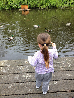 A Simple Sunday At The Duck Pond