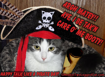 Anakin Two Legged Cat Happy Talk Like A Pirate Day