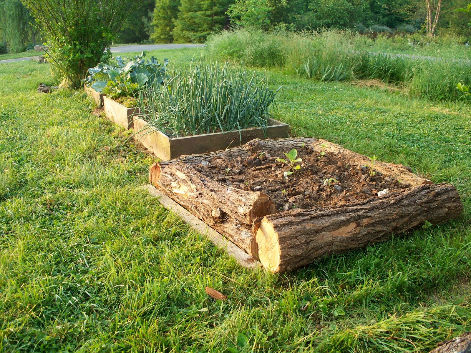 Vegans living off the land raised bed garden ideas for Log ideas