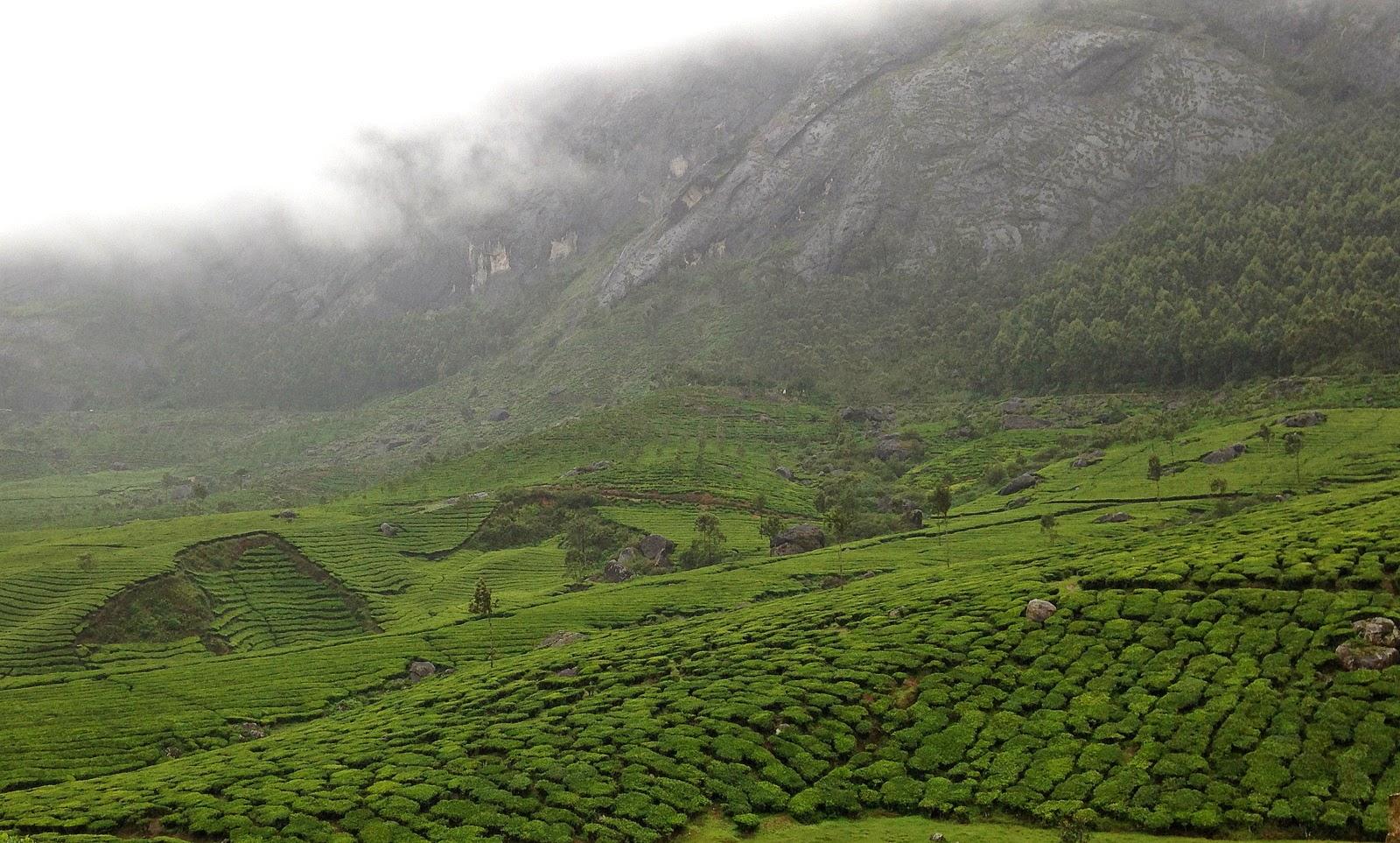 Munnar in Monsoon