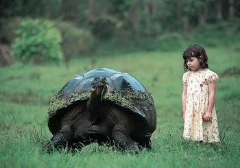 Ρεκβιεμ για τη χελωνα