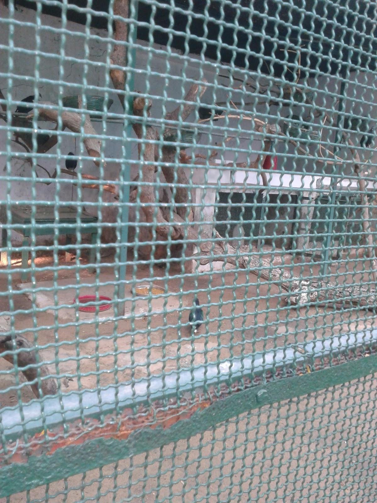 pigeon cage setup