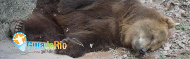 urso no Zoológico do Rio