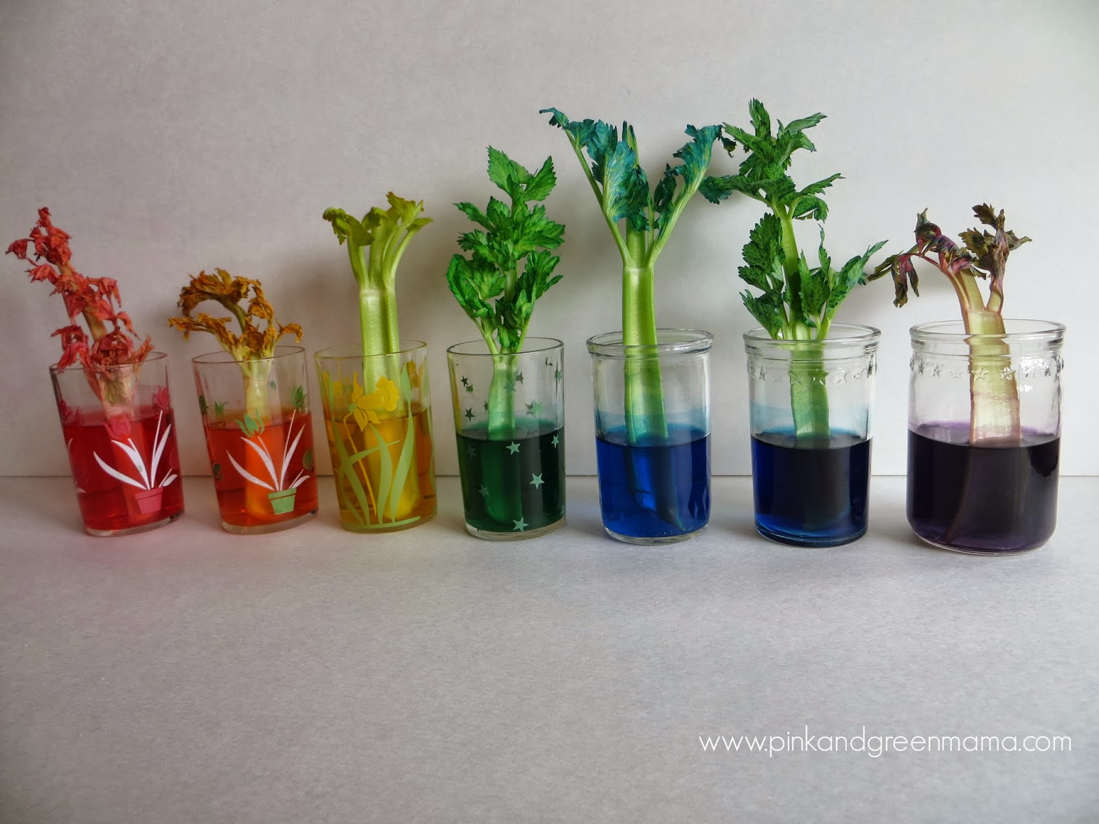 Celery Stalk Experiment With Food Coloring Images & Pictures - Becuo